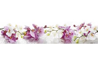 SP-90 orchidea