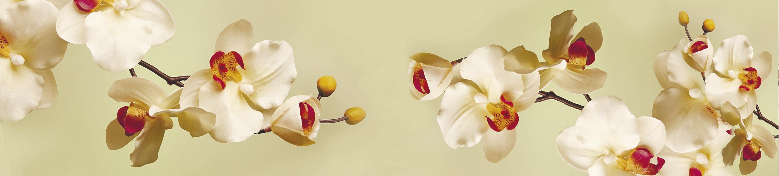 Nástenný panel SP-102 žltá orchidea